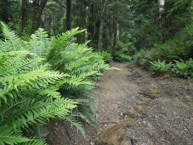 $2.5 million for world-class bike trails in North East Tasmania