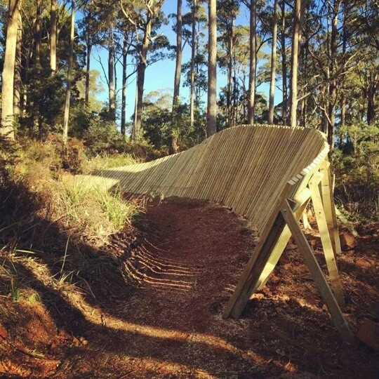 Hollybank Trails Official Opening